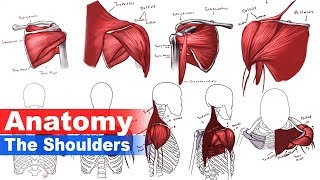 """[P1] The Shoulder Anatomy - The Arm - Anatomy series -""""Narrated"""" Tutorial no.3"""