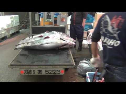 Tuna auction osaka fish market / Subasta de atún en el mercado de Osaka