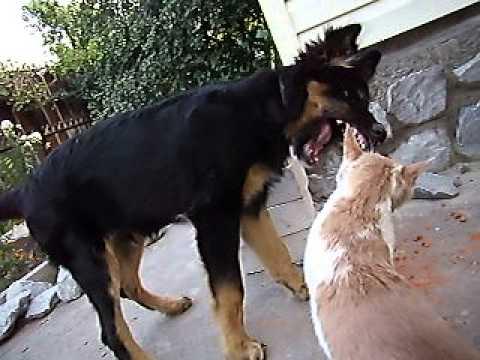 Сонник собака кусает кошку фото