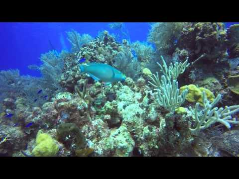 DiveWithMia goes scuba diving in Grand Turk, Turks & Caicos Islands