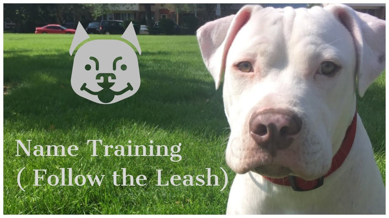 how to teach my dog its name