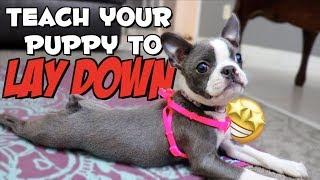 How to teach a puppy to LIE DOWN