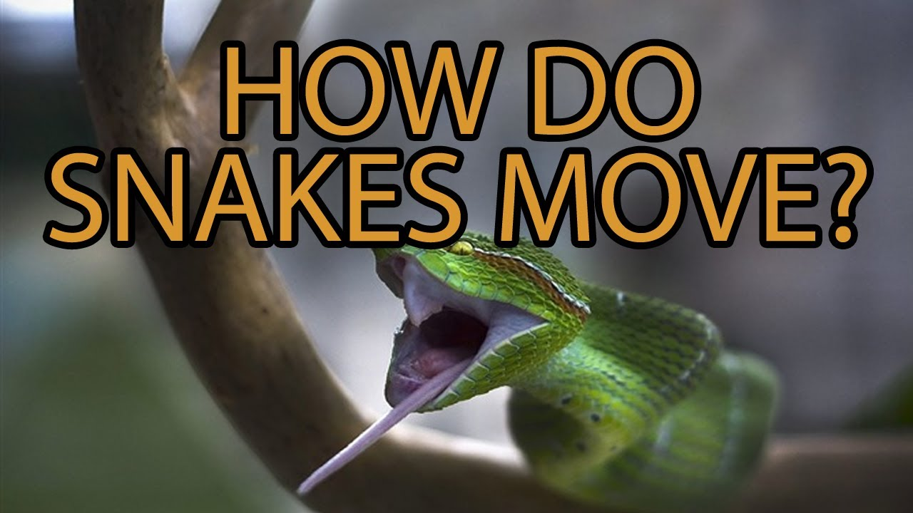 The Science Of Snake Movement Youtube Skeleton Diagram Find Incredible
