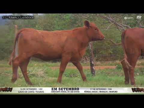 LOTE 079