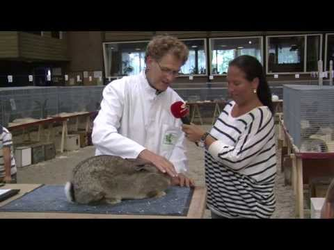 BKFV Jonge konijnenkeuring