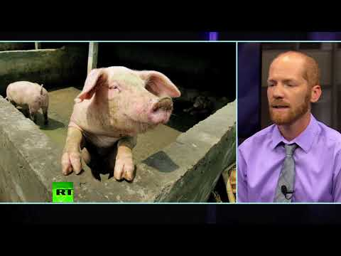 The Impact of Animal Agriculture with Chris Schlottmann