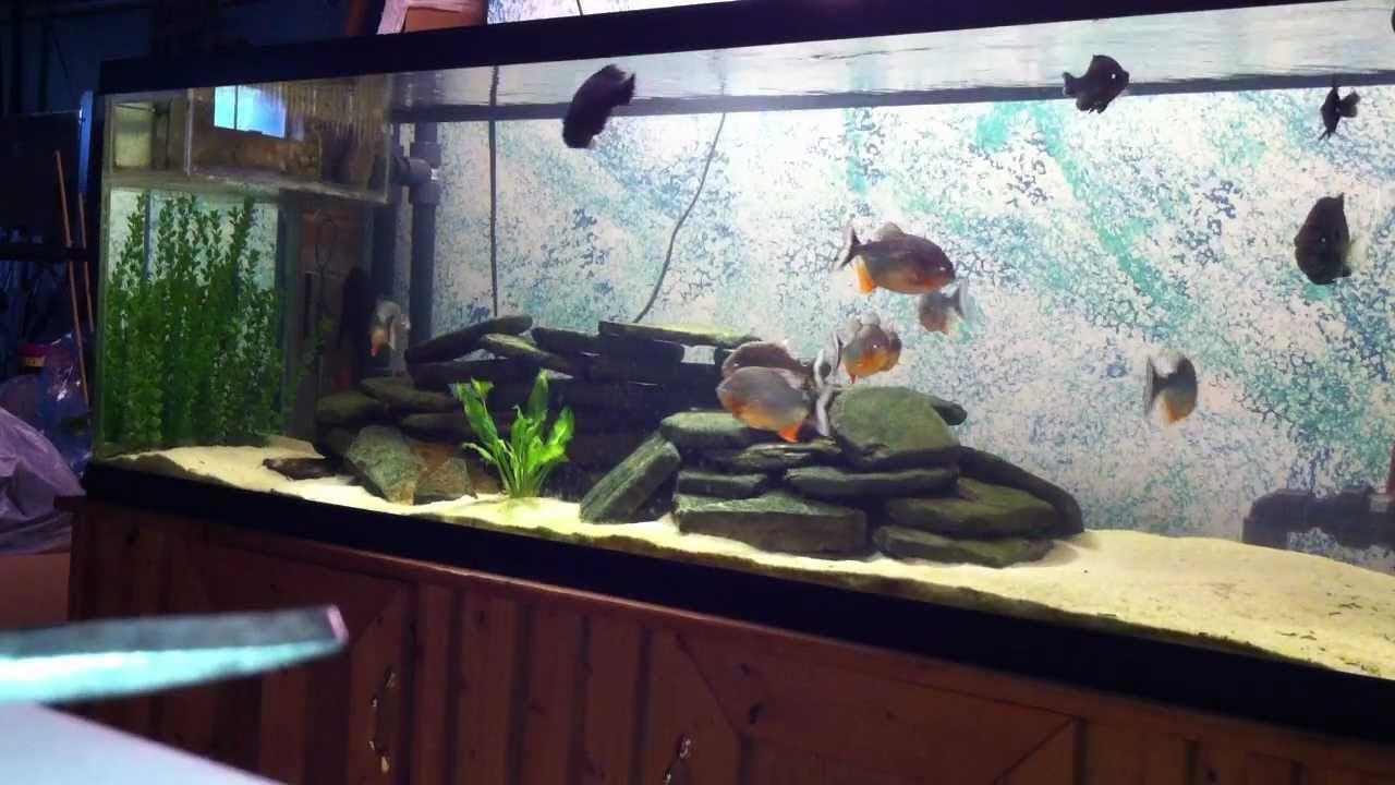 Fish tank dimensions - Fish Tank Dimensions