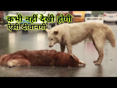 Nano film on dog crying over dead friend || please watch || whatsapp status