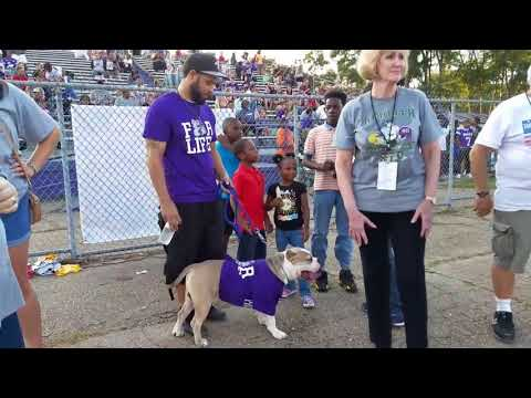 Can Ville Platte High School be the first school to have The American Bully as their Mascot