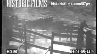 Historic Films Hd Collection - Horses In Corral Stampede
