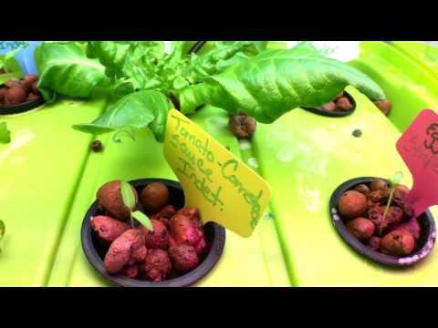 New Plants added, Determinate/Indeterminate What
