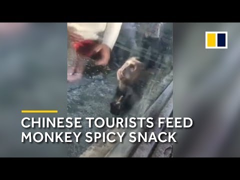 Chinese tourists feed monkey spicy snack