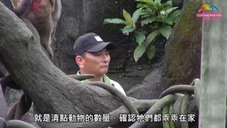 少年做到快白頭-猴國春秋他最了 Zookeeper of The Formosan Macaque