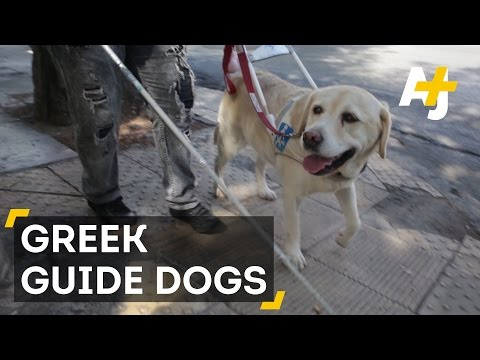 Bringing Guide Dogs To Greece