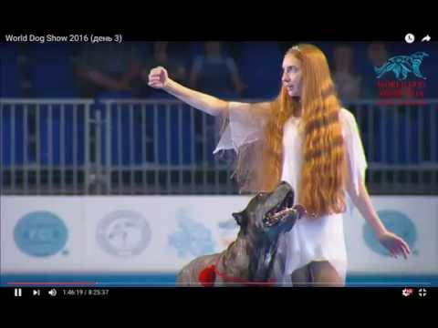 CANE CORSO FREESTYLE MOSCOW 2016 !!