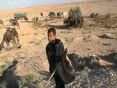 Syrian desert and camel farm