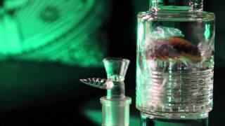 Pulse Glass BOSS JIM
