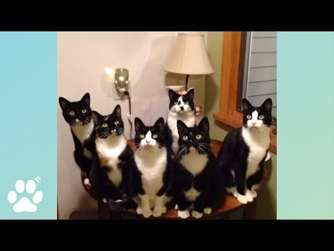 They're Always Watching | Funny Cat Videos