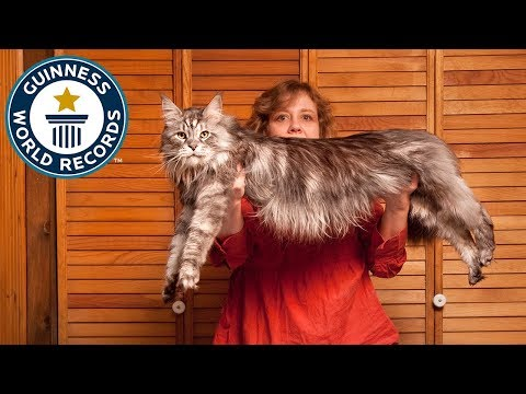 The World's Longest Domestic Cat - Meet The Record Breakers