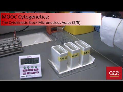 MOOC Cytogenetics 2/5 : The Cytokinesis Block Micronucleus Assay