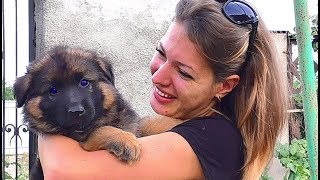 Щенки Немецкой Овчарки! 1,5 мес. Puppies of the German Shepherd!