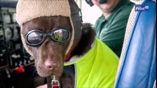 Собака - член экипажа самолета
