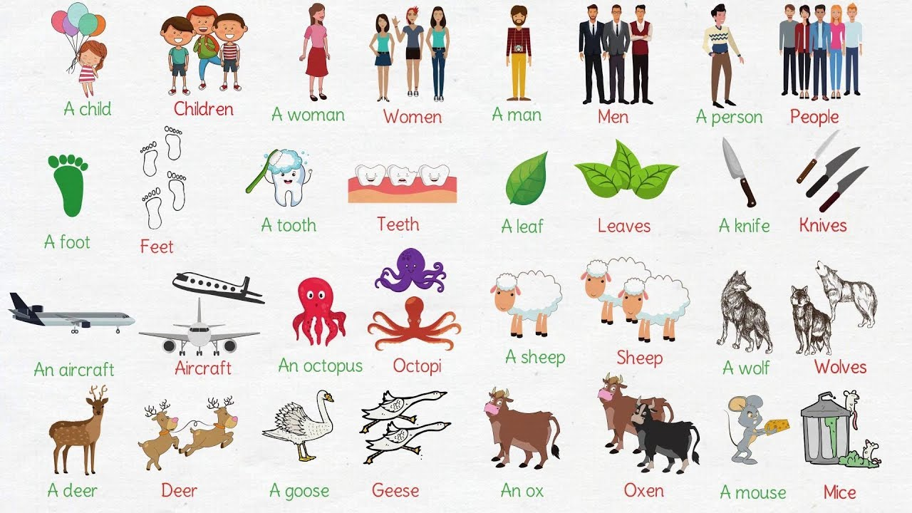 learn common irregular plural nouns in english irregular plurals