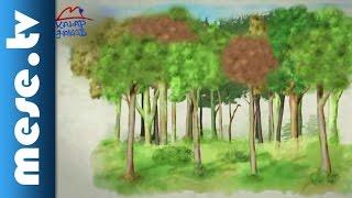 Kalap Jakab együttes - Ültess fát (videoklip, gyerekdal) | MESE TV