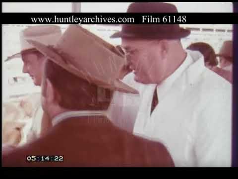 Cattle Auction At Homebush Australia, 1970s - Film 61148