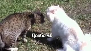 Коты чтото доказавыают друг другу . Ржала пол часа может и более / Видео