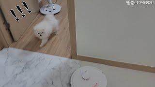 로봇 청소기 무서워하는 강아지