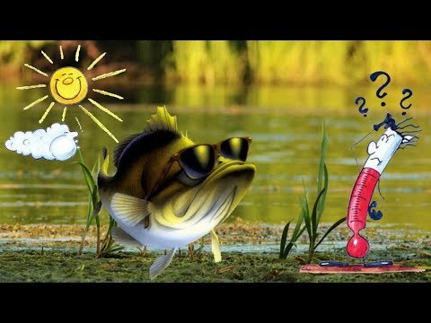 Активатор клева рыбы в летнюю жару