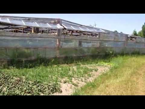 Выращивание огурцов и томатов в большой теплице. Полезные советы.