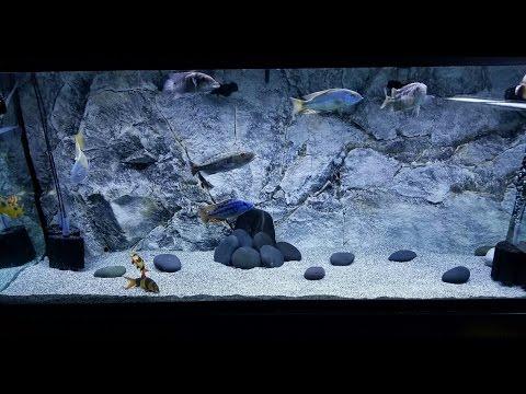 Boosting PH in my African Cichlid Aquarium, Did it Work?