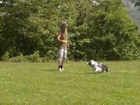 Frisbee border collie www. petrademone.it
