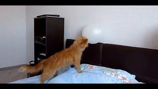 Кот и шарик / Cat playing with baloon