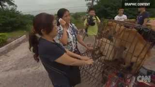 ✦CHINA DOG MEAT FESTIVAL AT YULIN SPARKS OUTRAGE✦