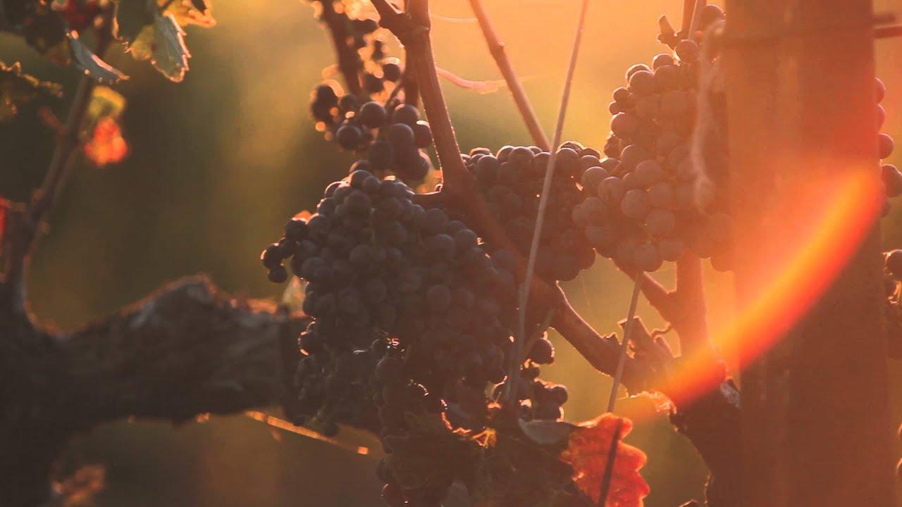 Ferrari Carano Vineyards U0026 Winery   Cabernet Sauvignon
