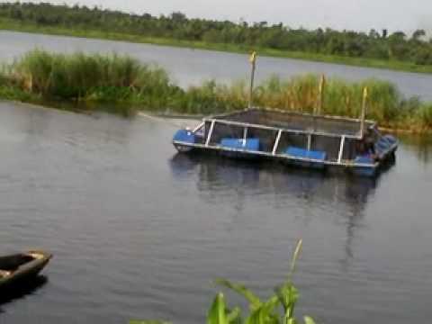 CAGE CULTURE IN LAGOS