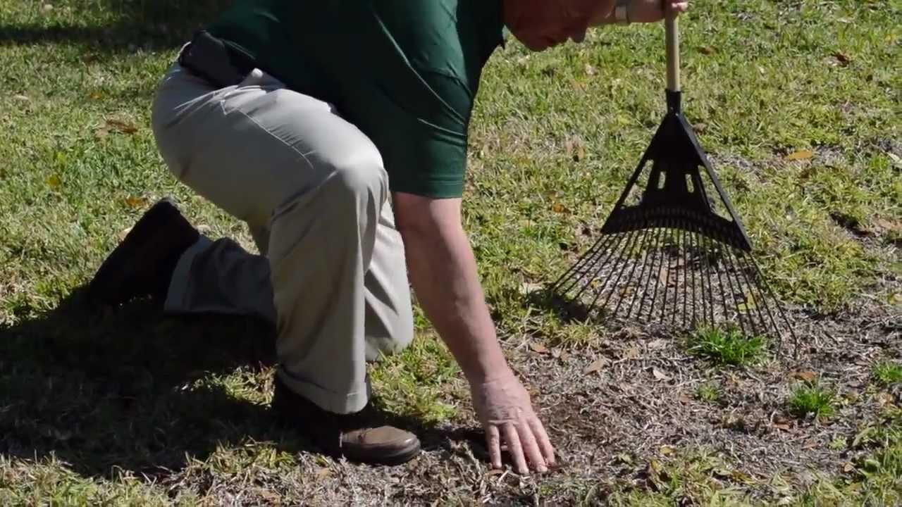 early spring lawn care tips - 1280×720