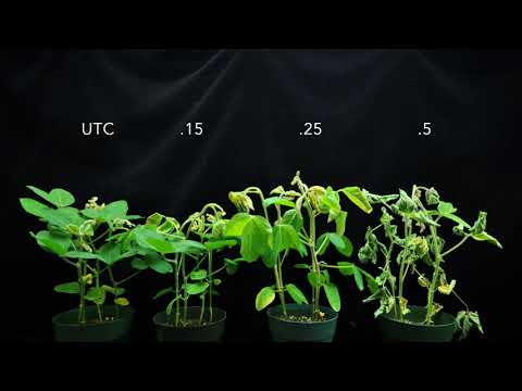 Dicamba (SOA 4) on Soybeans 4X time