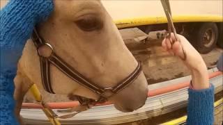 Обучение Дарчи. 9 выпуск. Груминг коня после каникул.