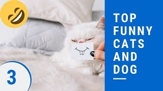 Top funny cats and dog Part 3 - 😻best funny cat and dog videos ever 2019😻