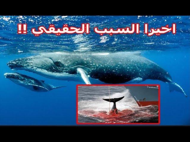 اخيرا تفسير صوت الحوت الازرق علي سواحل البحر المتوسط 19 12 2019 سبحان الله Youtube