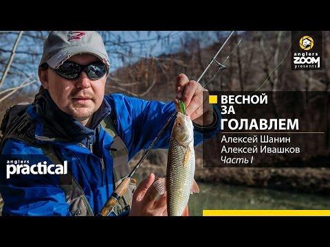 Весной за голавлем. Алексей Шанин, Алексей Ивашков. Часть 1. Anglers Practical.