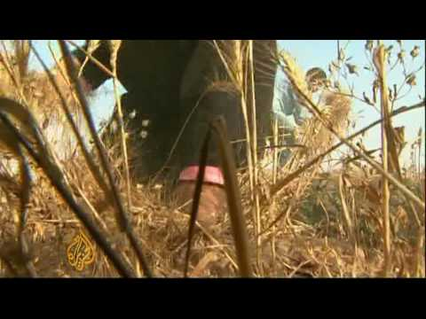 Gaza farmers risk being shot