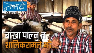 बाख्रा पाल्नु त शालिकरामले झै....[ The Nepal today ] Agriculture. Goat Farming in Nepal.