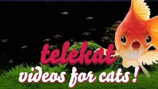 telekat videos for cats to watch the humongous aquarium