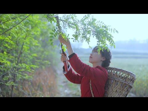 陸綜-李子柒 Liziqi -EP 005-蒜的一生,實在想不出有創意的名字了!下次你們幫我想!