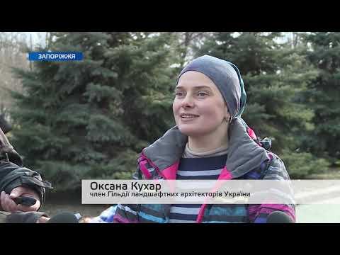 Телеканал TV5: Працівники КП «Зеленбуд» відвідали майстер-клас з декоративної обрізки дерев